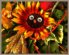 The Eyes of the Sunflower - by krisdecurtis