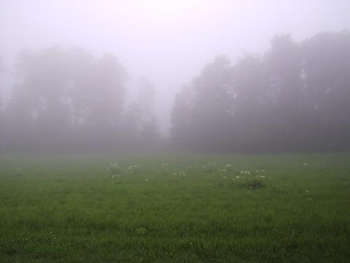 Misty Jura Switzerland Suisse