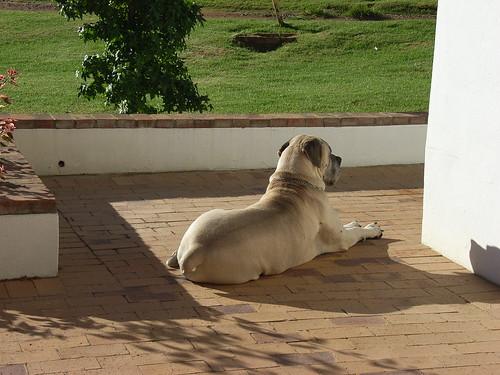 Sydafrika feb 2007 423