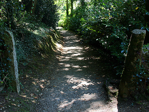 Sun Dappled Path II