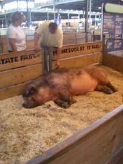 MN Largest Boar
