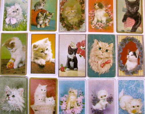 Kitten Paper