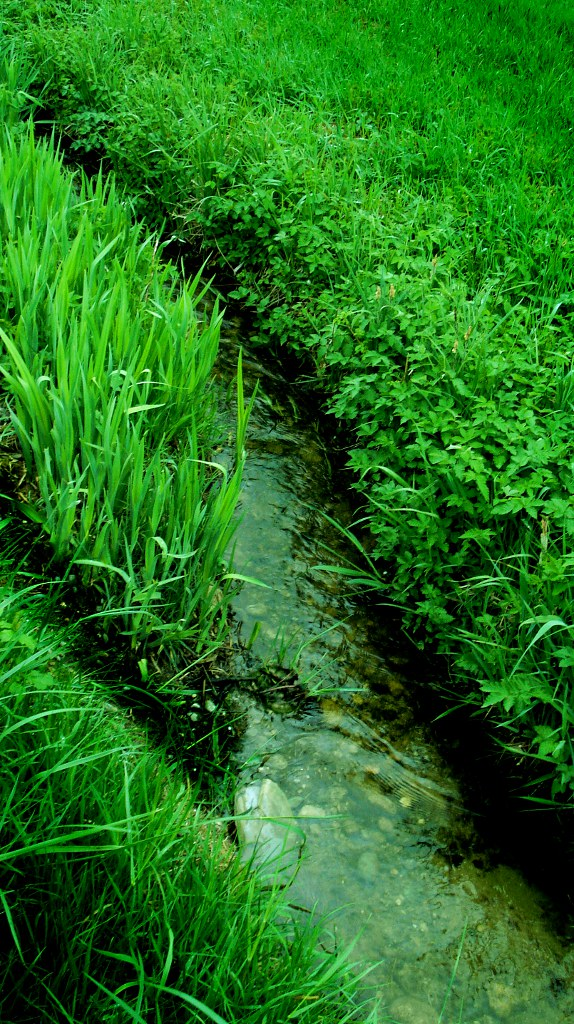 Bach im Frühling - brook in spring