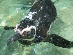 Hi Penguin