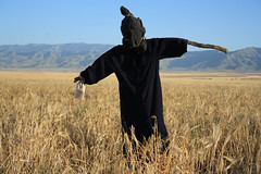 (P A H L A V A N) Tags: park photo persian iran jafar persia ali iranian pars  sina ahmadi  irani farsi melat  fars parsi daregaz   kazem  dargaz   pahlavan   barzegar chehelmir
