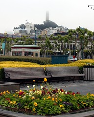 COIT Tower (Prayitno / Thank you for (11 millions +) views) Tags: sf california ca flower tower fog pier bed fisherman san francisco sfo hill foggy wharf fishermans pier39 39 coit konomark