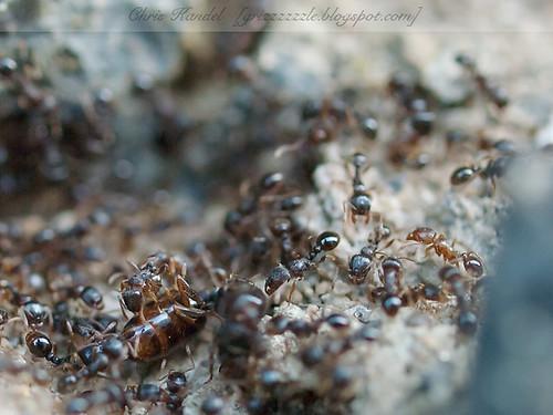 A Billion Ants