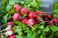 Radishes (joshbousel) Tags: nyc newyorkcity food radishes vegetable queens astoria radish csa communitysupportedagriculture hellgatecsa