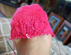 Campanula Sock at Home