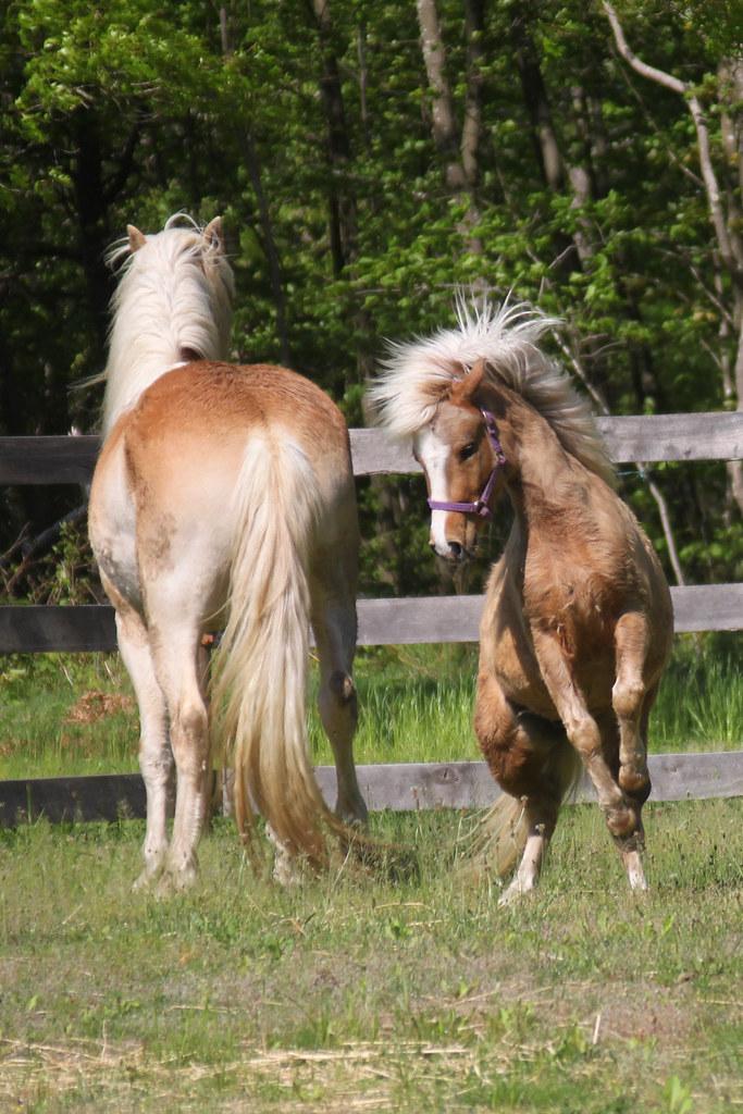 horses 208x