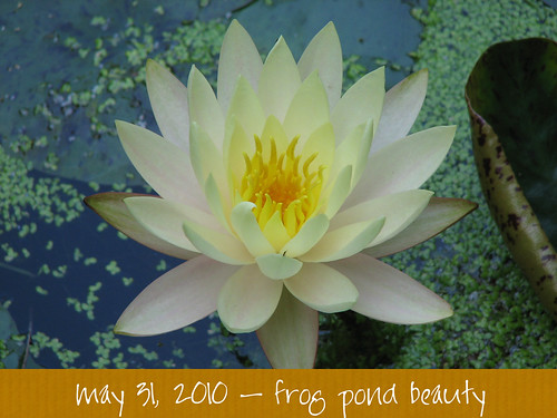 frog pond beauty