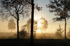 sunrise on misty morning (bugman11) Tags: trees sun mist tree nature fog sunrise landscape flora sony nederland thenetherlands cybershot soe wow1 wow2 wow3 wow4 wow5 magicofnature natureplus anawesomeshot flickraward platinumheartaward platinumpeaceaward bestcapturesaoi tripleniceshot elitegalleryaoi mygearandmepremium mygearandmebronze mygearandmesilver mygearandmegold mygearandmeplatinum mygearandmediamond bestmagicofnature