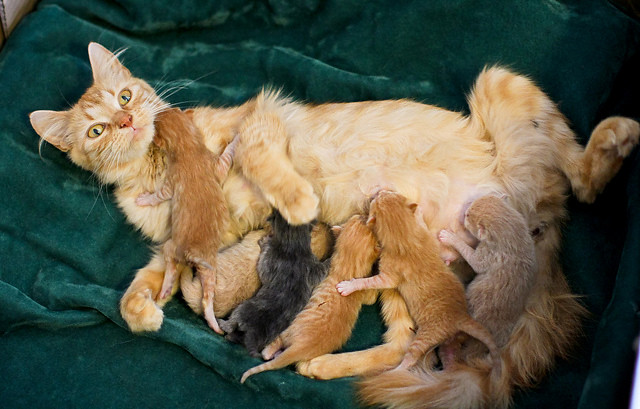 cute rescued cat mama and kittens