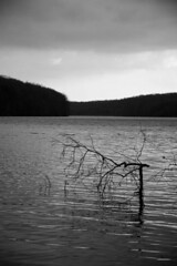 Lake Eerie (Kyle Rabold) Tags: park county bw white lake black tree film water dark ed arthur blackwhite branch state pennsylvania g pa butler horror nikkor limb 1870mm moraine afs dx esque f3545