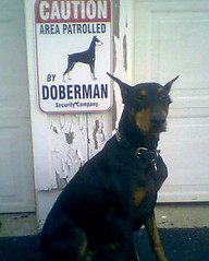 doberman security