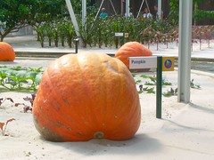 Giant Pumpkins! by abbynormy, on Flickr