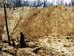 Indonesia Bandung vulcano 2 (mhoeboer) Tags: forest indonesia bandung vulcano thegoldenmermaid