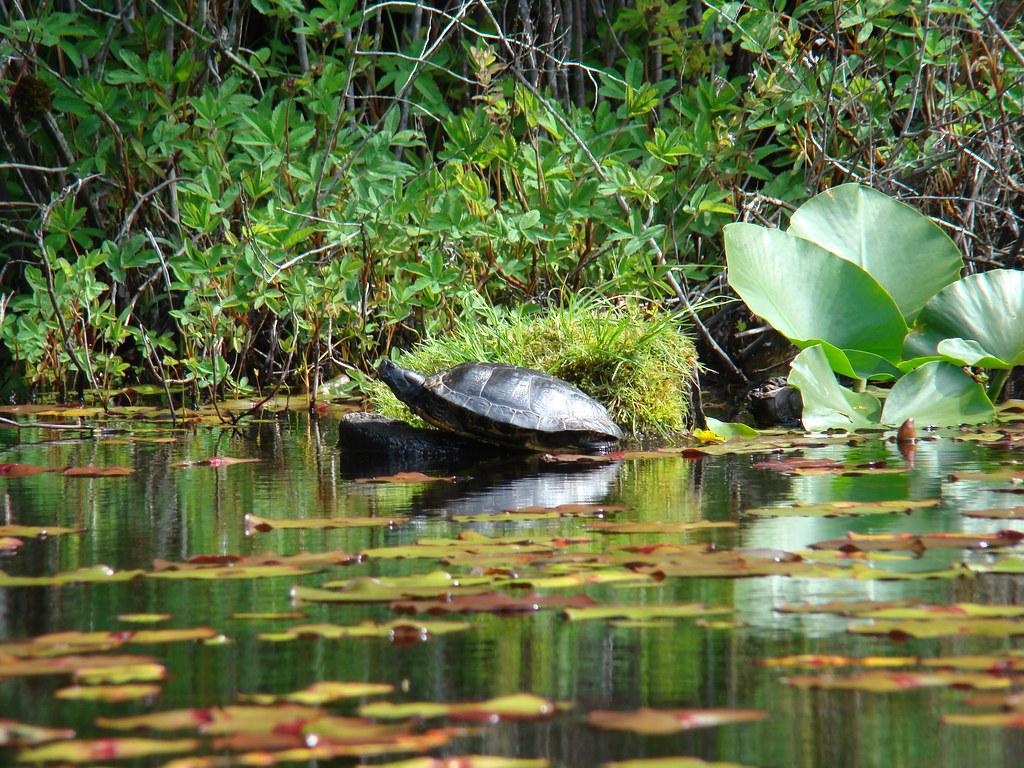 2010-06-07 Thetis Lake 086