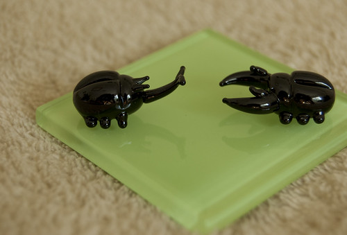 Glass Beetles