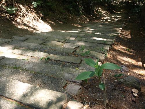 Geocache: Iwashimizu-Hachimangu Entrance Gate