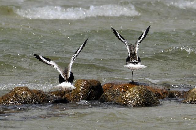 synchronized takeoff