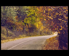 Autumn (seyed mostafa zamani) Tags: life road city autumn trees abstract cold