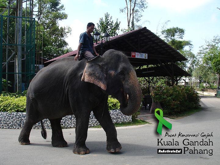 Pusat Konservasi Gajah