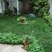 Backyard, 493 Dean Street