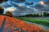 Flopper At Work (flopper) Tags: trees light sunset shadow sky orange water clouds creek ray tripod trail crop fremontca interestingness10 interestingness6 interestingness7 interestingness8 flopper interestingness25 6cwinner fremontclubwinner picjune20072 picjune20071