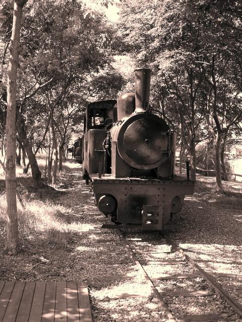 1467296444_早期靠這個列車頭 將原木給載下山來