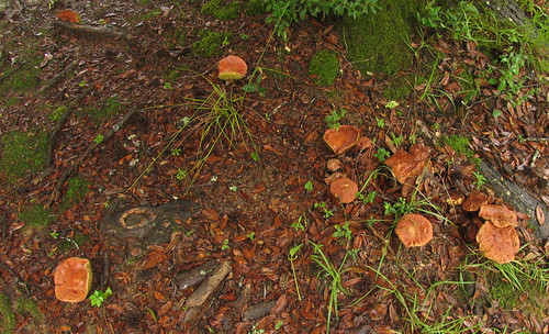 Mushrooms appear overnight
