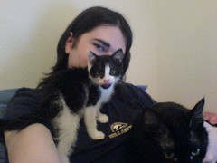 cat covers