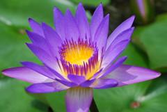DSC_0070 (pranav_seth) Tags: flowers nature ilovenature malaysia kualalumpur naturesfinest specnature abigfave