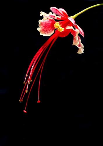 flower shower...