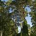 Arborétum des Grandes Bruyères