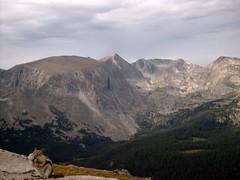 Rocky Mountains Chipmunk