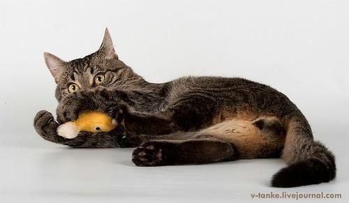 Всем поклонникам кота Пиндыка посвящается :) Pindo & Co (19)