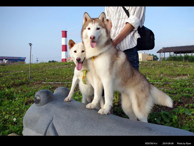 狗狗與高美溼地