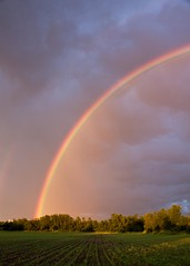 Half Rainbow (Kirpernicus) Tags: sky color nature beautiful field weather clouds landscape rainbow corn cornfield colorful vermont spectrum eyecandy