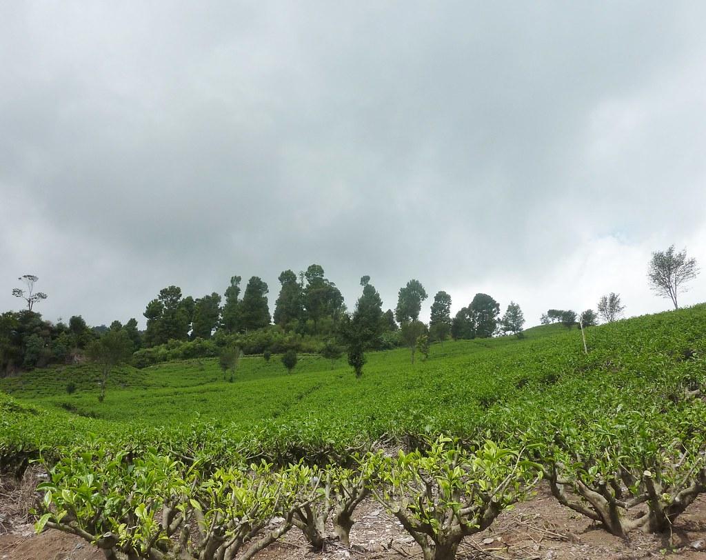 Java-Bandung-Region (61)