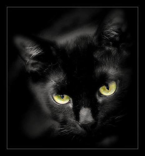 853 Black Cat 1