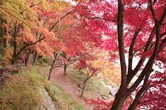 塩原温泉の紅葉3