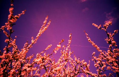 LCA xpro flower & sky