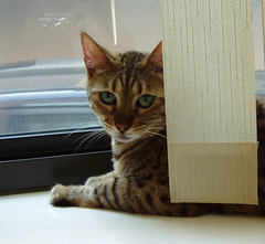Pixel in the front window