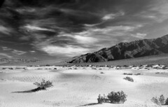 Devils Cornfield - Death Valley National Park (Chris28mm) Tags: california park blackandwhite bw usa mountains hot clouds 35mm landscape sand nikon highcontrast dry deathvalley n80 ilford nationalmonument deathvalleynationalmonument devilscornfield redfilter ilforddelta100 fineartphotos chris28mm 2850mmnikkor 2450mmf3345af copyright2007chrisjackson stealingshadows