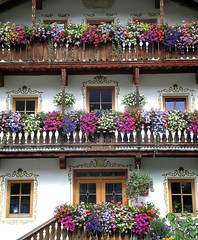 colorful flowers house - la casa dei fiori colorati (chpaola) Tags: pink blue windows red italy white flower building green nature vivid olympus explore moso oldcity altoadige impressedbeauty diamondclassphotographer suedtyrol provinciadibz