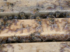65.蜜蜂築巢