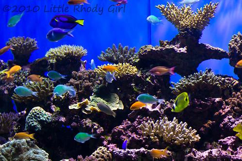 Aquarium_1