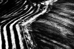 Terraforming (Effe.Effe) Tags: bw italy signs tractor abstract monochrome lines rural stripes tracks bn hills land terra plowing manualfocus marche colline trattore ploughing bande segni tracce linee arare vintagelens pentacon135mmf28 solchi aratura