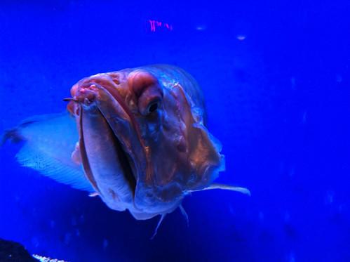 Mystery fish.